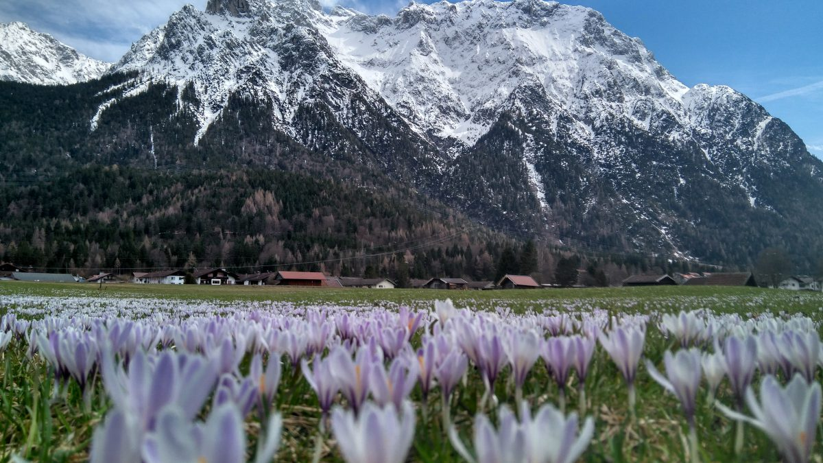 Karwendel und Blütenmeer