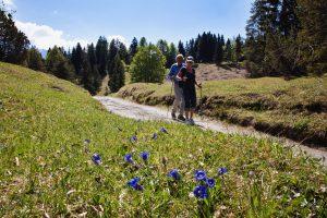 Nordic Walking im Frühling
