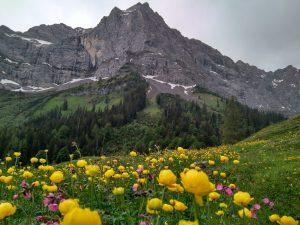 Trollblumen in der Eng
