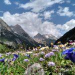 Juniwiese im Karwendeltal