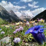 Bergblumen
