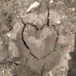 Ein Herz für Dürre