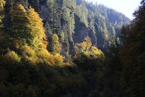 leuchtender Bergwald