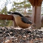 Fressen im Vögelhaus