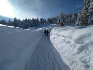Tief verschneiter Weg zum Wildnesee