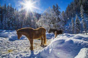 Pferde in der Elmau